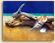 Painting of Still Life with Driftwood in Cornwall